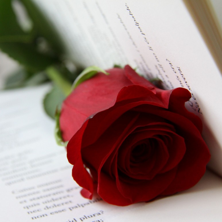 Books and Roses to celebrate St Jordi 2013 in Barcelona